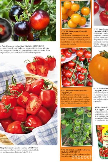 tomaatit-kauppila1
